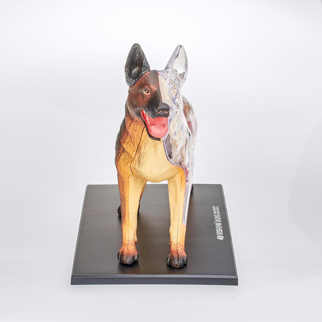 Großzügig 3d Anatomie Hund Ideen - Menschliche Anatomie Bilder ...
