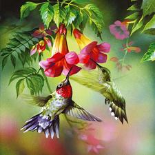 Puzzle - Kolibri Ein Spaß für die ganze Familie – spannend und entspannend zugleich.