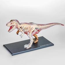 """3D-Anatomie-Puzzle """"T-Rex"""" 3D-Anatomie-Puzzles"""