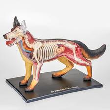 """3D-Anatomie-Puzzle """"Hund"""" 3D-Anatomie-Puzzles"""