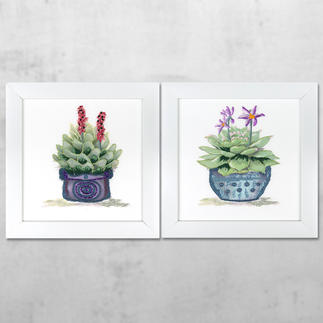 Watercolour-Styles Bilder-Set - Sukkulenten Watercolour-Styles – Sticken mit 3D-Effekt.