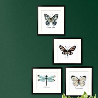 Stickbilder - Naturstickereien Stickbilder - Schmetterling